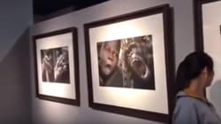 Exposição na China é acusada de racismo por comparar negros a animais