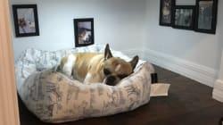 El perro que estrenó su propia habitación (construída por su
