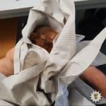 「赤ちゃんリスに追いかけられている」パニックに陥った男性が警察に通報