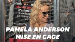 Pamela Anderson se fait enfermer lors d'un happening contre les élevages en