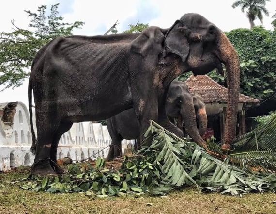Crushing photos show severely malnourished elephant