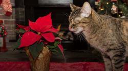 Aleja a tus mascotas de estas plantas