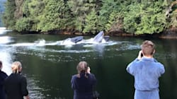 Ces touristes ont été éblouis par l'apparition de deux baleines à bosse au pied de leur chalet