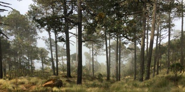 De acuerdo a estudios del Instituto Nacional de Ecología y Cambio Climático la construcción de Bosque Diamante pude causar la fragmentación de la biodiversidad del lugar y la perdida de especies catalogadas en alto nivel de riesgo o en peligro de extinción.