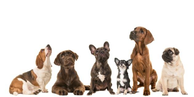 Un grupo de varios perros viéndose entre ellos.