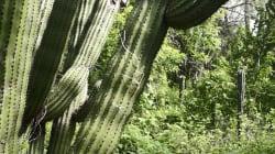 FOTOS: El mayor santuario de cactus en el mundo se encuentra en