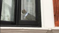 Mais quel message veut faire passer Assange avec son