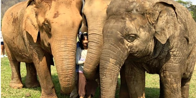 Genie is part of this elephant herd in Thailand