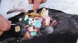 Este país tiene un enfoque radical sobre la contaminación del plástico, y