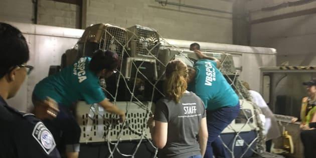 """Sur chaque caisse transportant un animal était inscrit le message suivant: """"J'ai survécu à Irma. Je suis encore nerveux. Merci d'être prudent avec moi."""""""