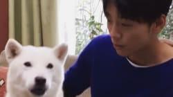 竹内涼真、犬のお父さんに