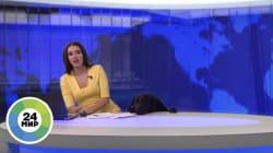 Doggo Decides To Pursue Newsreader Career At The Most Inconvenient