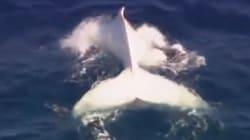 Moby Dick, c'est