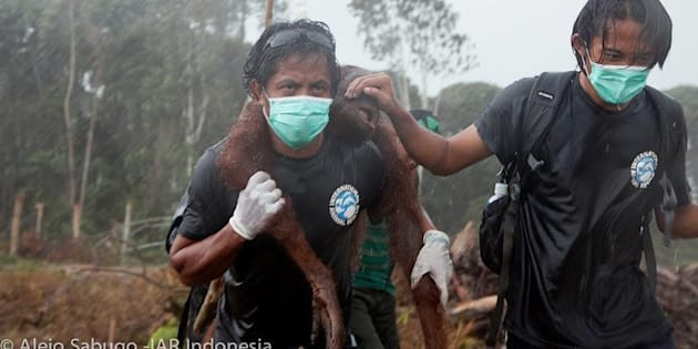 "Animal rescuers Syifa Sidik and Argitoe Ranting were called ""truly real life heroes"" by International Animal Rescue."