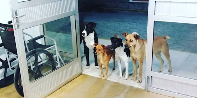 Il senzatetto viene ricoverato in ospedale, i suoi cani lo aspettano sulla soglia. Questa foto farà il vostro ...