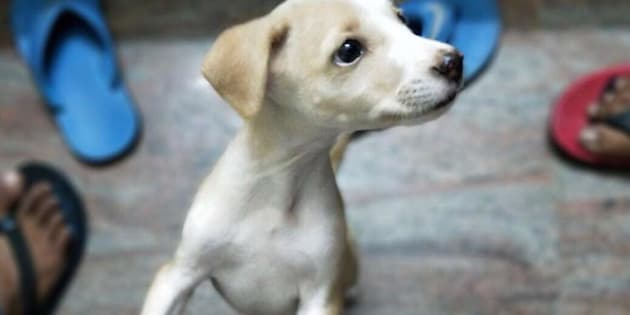 TN engineering student kills two puppies by throwing them off terrace