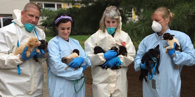 Nearly a dozen puppies are seen after being removed from a New Jersey home on Friday.