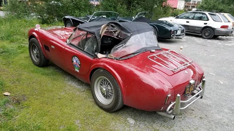 1965 Shelby Cobra mauled by Alaska grizzly bear in search of Fig Newtons