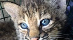 Woman Says She Took Home 'Kittens,' Only To Find Out They Were