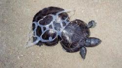 17 fotos que muestran cómo daña la basura a los animales
