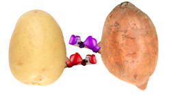 Spud Wars: Is Potato Or Sweet Potato