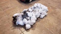 Retrouvé congelé, ce chat est un