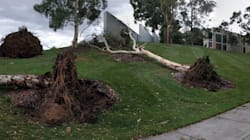 Canberra Storm: Parliament House Lawns Have Been Destroyed, Trees
