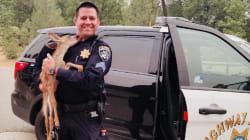 Ce policier qui a sauvé un petit faon des incendies devient un héros en