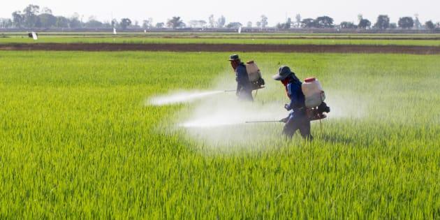 """O greenwashing (em português, """"lavagem verde"""") defendido pelos deputados da Frente Parlamentar da Agropecuária faz parte do jogo de marketing que quer ocultar os impactos negativos dos agrotóxicos."""