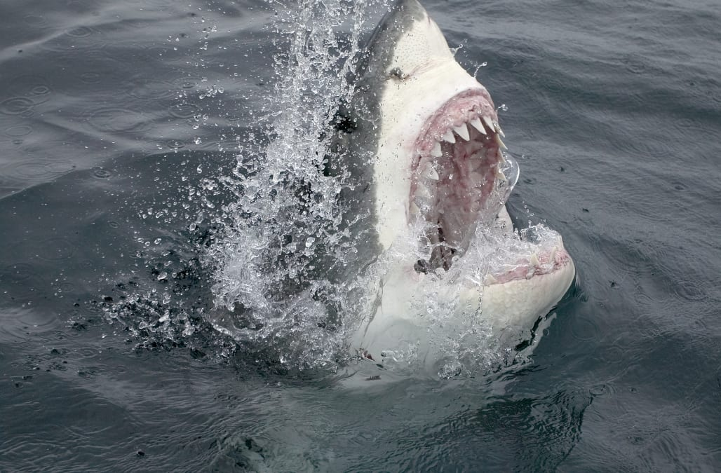 A Great White Shark Has Spent The Last Several Weeks Off Coast Of Myrtle Beach And People Are Starting To Worry About What That Could Mean For