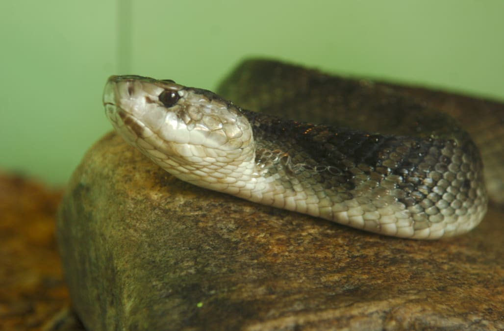 Writhing snake head shows us why you shouldn\'t cut the head off a ...