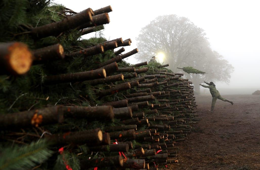 Non-drop Shop: Christmas Tree Farmer Prepares For Seasonal