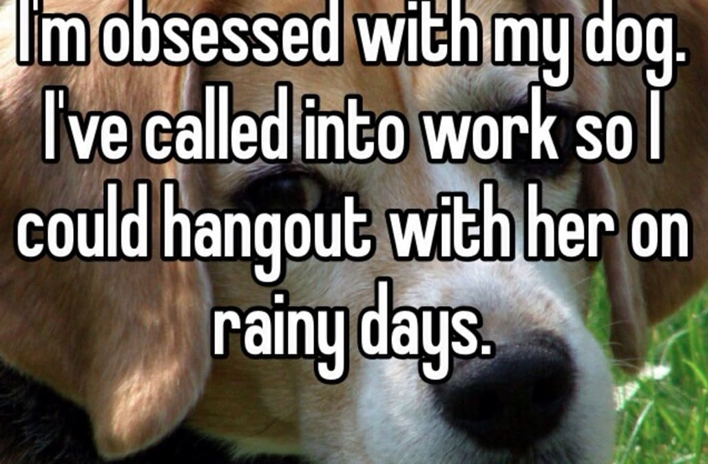 Confessions of the world's most obsessive dog-lovers - AOL News