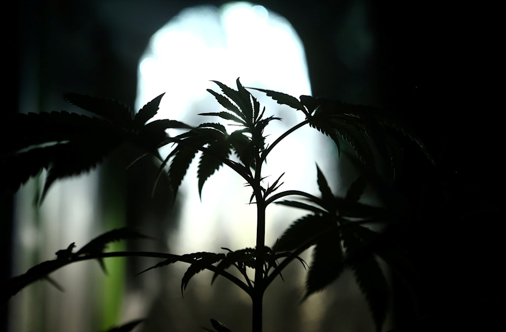 Fda Warns Of Products Claiming To Cure >> Marijuana Products Don T Cure Cancer Fda Warns Aol News