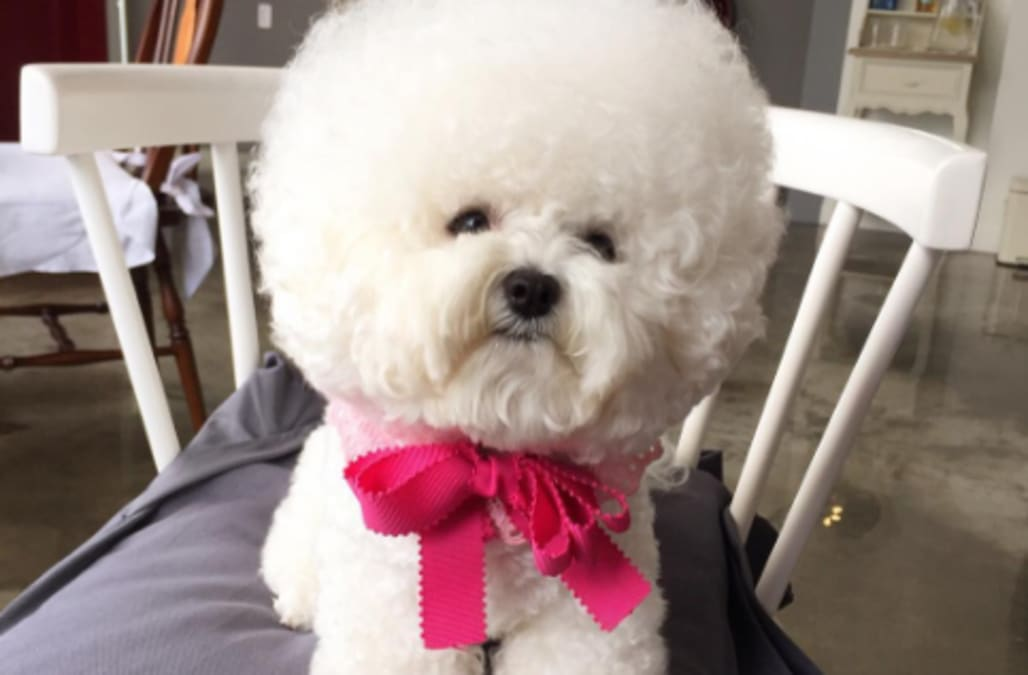 Poofy cotton ball dog will put a smile on your face aol - Put cotton ball trash can ...