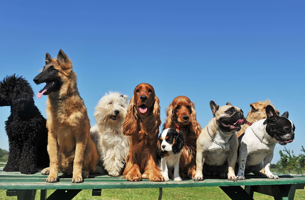 These are the 25 smartest dog breeds, says science