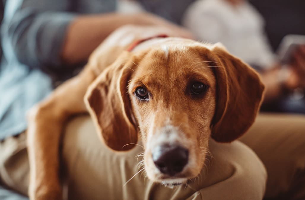 8 Silent And Not So Silent Signs Your Dog Has Dog Flu Aol Lifestyle