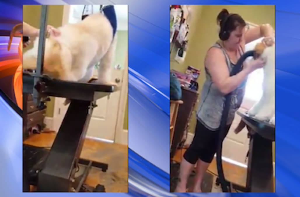 Video Of Groomer Abusing Dog Goes Viral