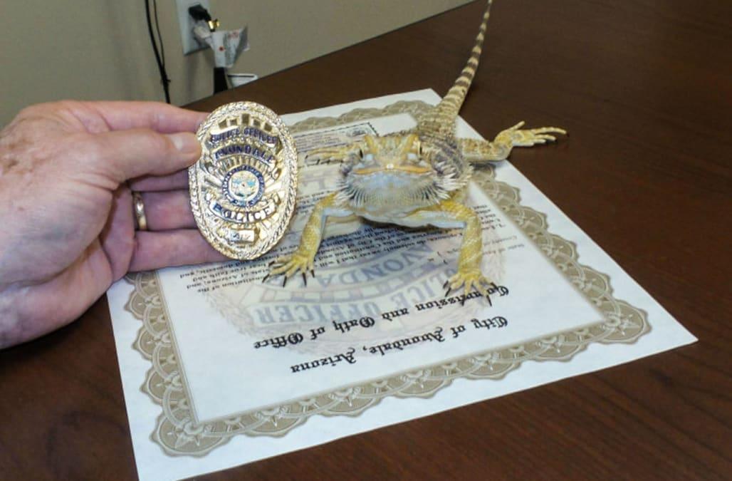 Lizard becomes police officer in arizona aol news for Avondale motor vehicle division avondale az
