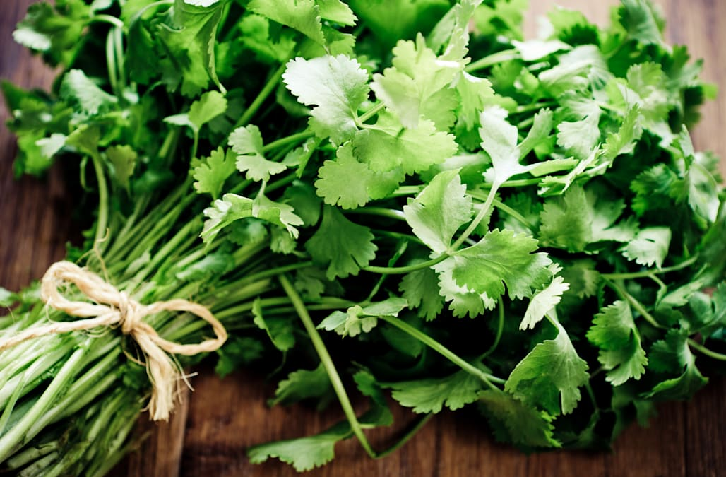 Health cup. Cilantro, a tonic for body and soul (coriander ... |Crushed Cilantro