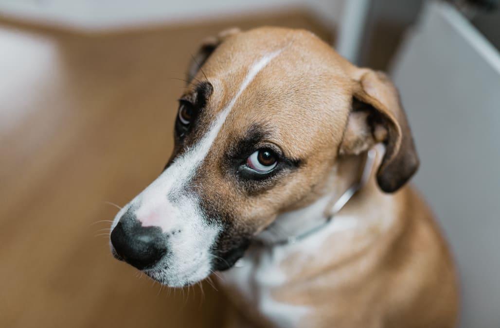 scope magazine can your dog predict the future
