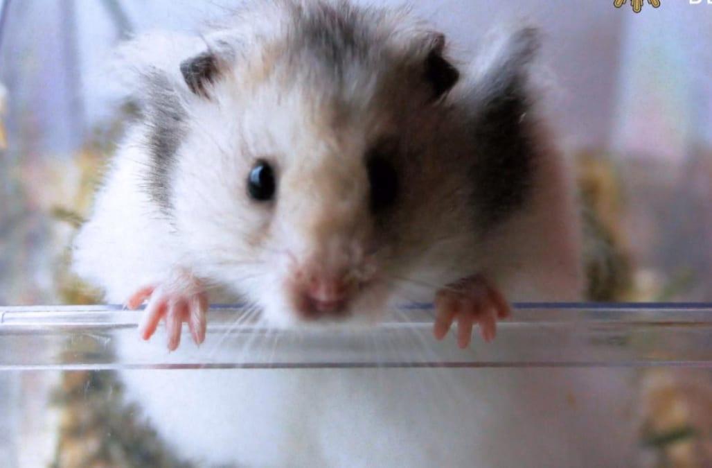 Смотреть секс hamster