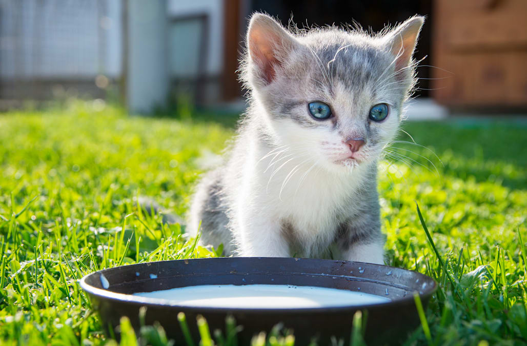 petsmart cat food calculator