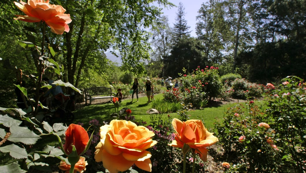 LA CANADA FLINTRIDGE, CA � May 08, 2009 ��� Rose garden blooms at Descanso Gardens in La Canada Flintridge that celebrated a National Public Gardens Day on May 08, 2009.  (Photo by Irfan Khan/Los Angeles Times via Getty Images)