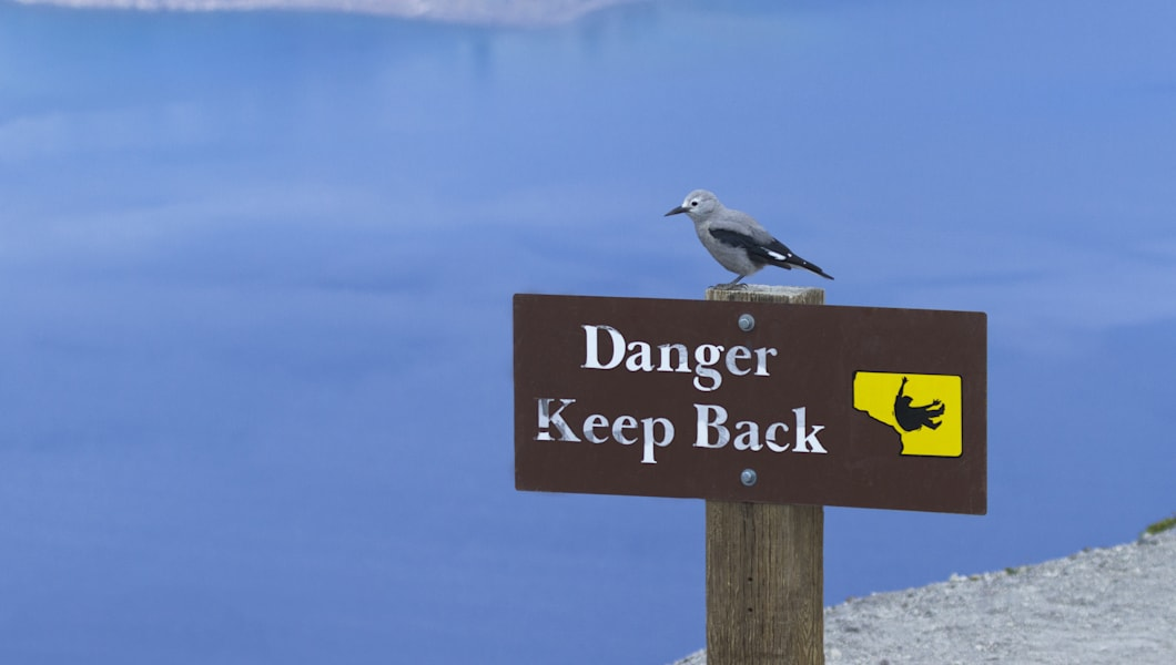 Clark's nutcracker perched on Danger Keep Back sign in Crater Lake National Park in Oregon, USA, near town of Klamath Lake.  Signage warns against approaching the cliff edge and a fall from heights.