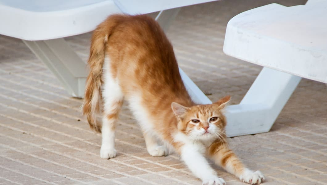 Homeless cat in Malta stretching by the hotel pool