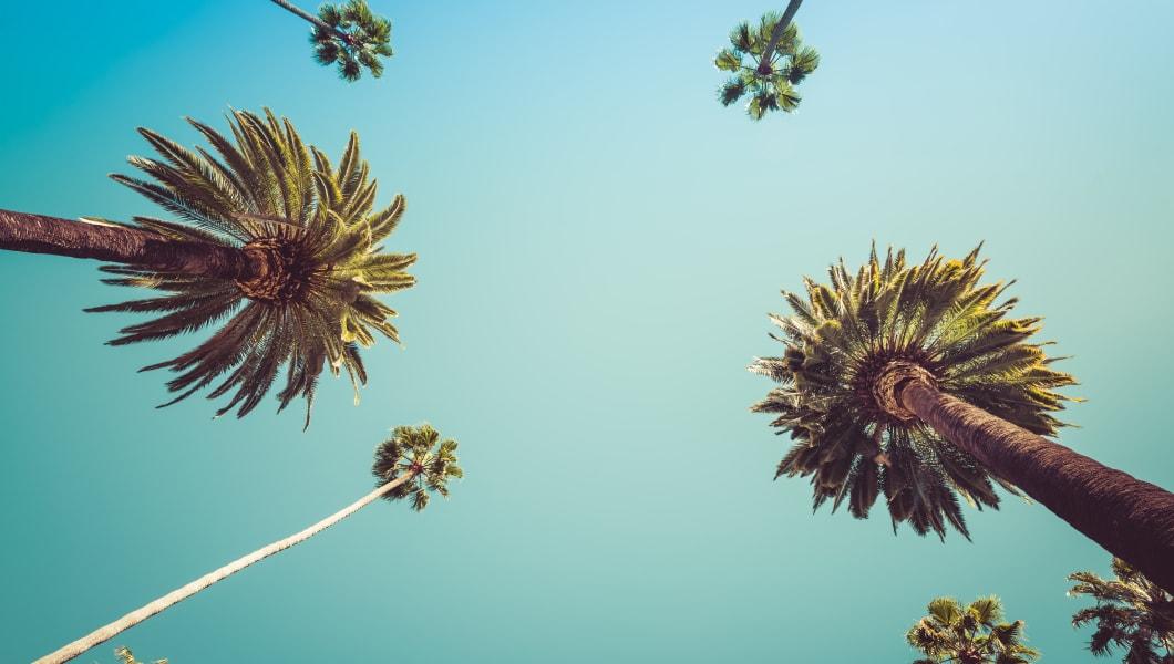 Redeo Los Angeles Vintge Palm Trees Vintage - clear summer skies