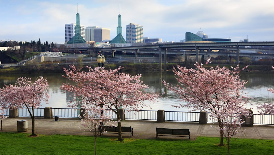 Cherry trees blooming on the waterfront in Portland Oregon.