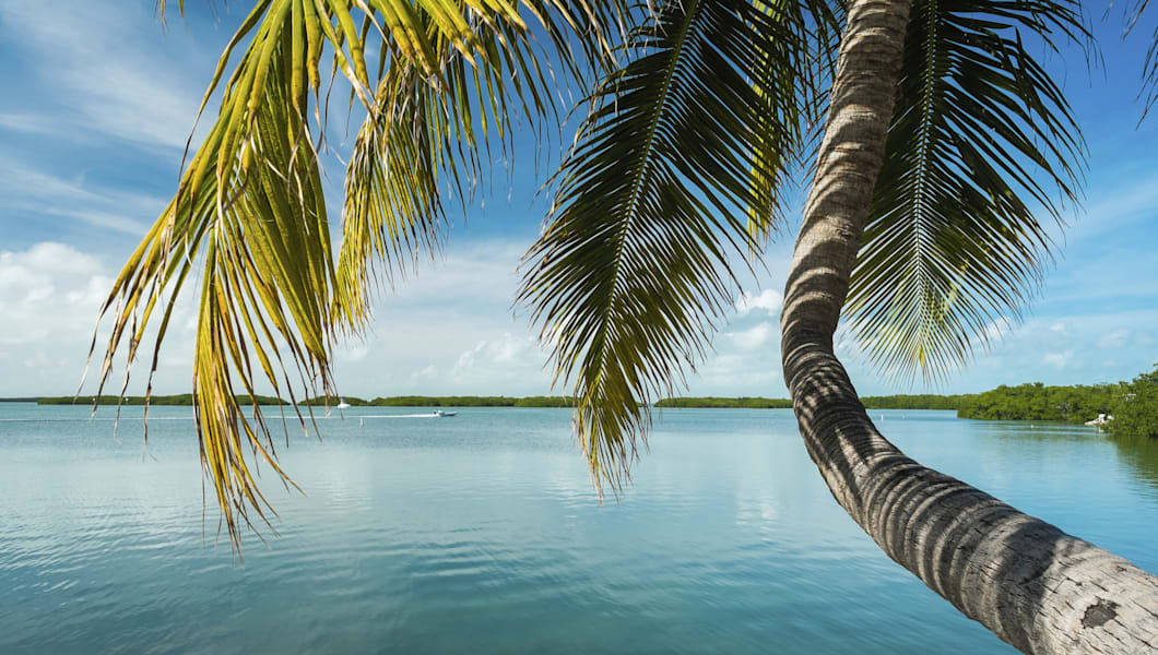 Beautiful Florida Keys along the shoreline coconut palm tree and gulf view.