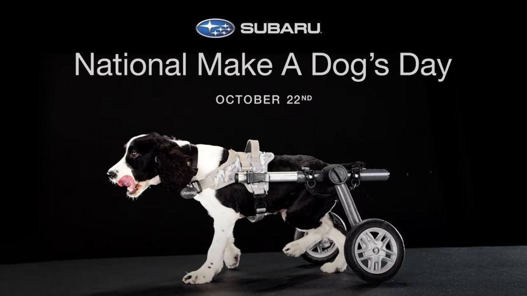 Make-a-Dog-Day.jpg